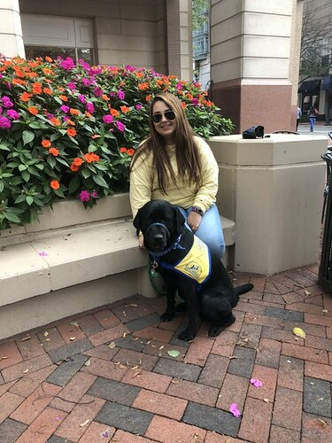More than cute: the impact of service animals on university students
