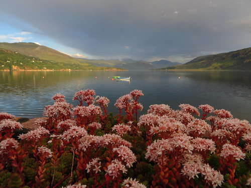 Les fleurs d'Ullapool, Ross and Cromarty, Ecosse, Grande-Bretagne, Royaume-Uni.