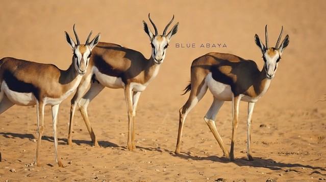 5059 Nofa Wildlife Safari Park and Resort in Riyadh 03