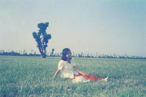中正圖書館館前國泰樹-1972