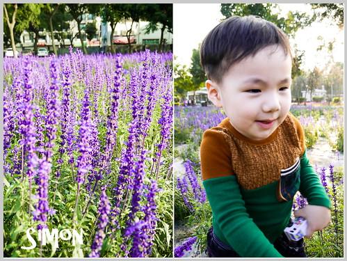台糖花卉園區09