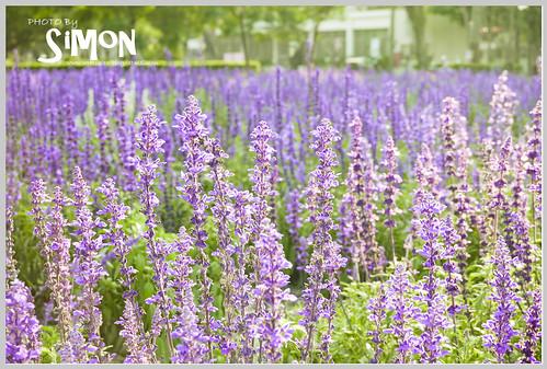 台糖花卉園區10