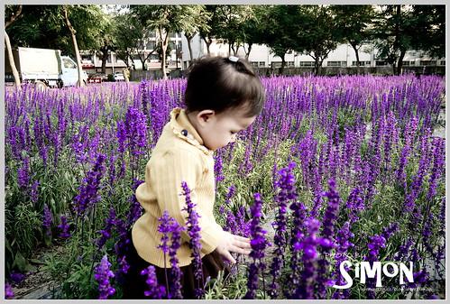 台糖花卉園區08